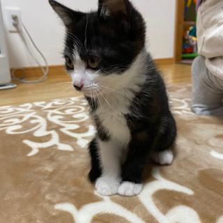 生後3ヶ月の子猫です。