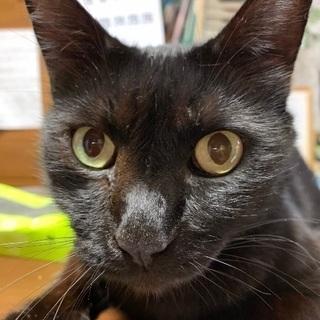 元気いっぱいお利口さんな黒猫ちゃん