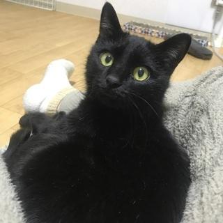 黒猫ナナちゃん 人懐こい女の子です♪