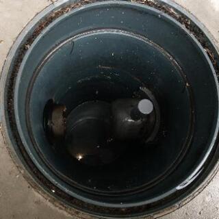 排水ます清掃
