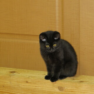 人気の黒ネコちゃんです ^-^