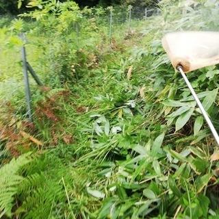 あなたの空き家の除草剤散布【空き家の雑草駆除・雑草対策】