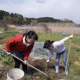 みんなで耕す(小)学校 草の根農業小学校