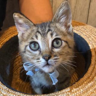 **幸せ探しのネコ譲渡会*子猫〜成猫**