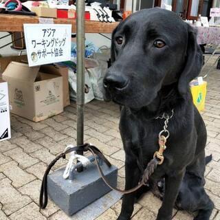 犬のしつけ方セミナーの画像