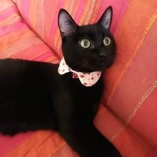 可愛い黒猫女子のしずくちゃん