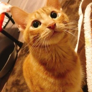 推定7ヵ月の甘えん坊のオス猫