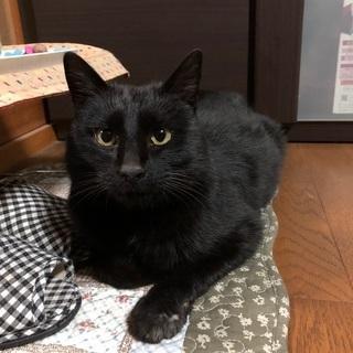 1〜2歳のオスの黒猫です