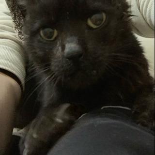 とても人馴れした穏やかな黒猫ジョイ君の終のすみかを探してます