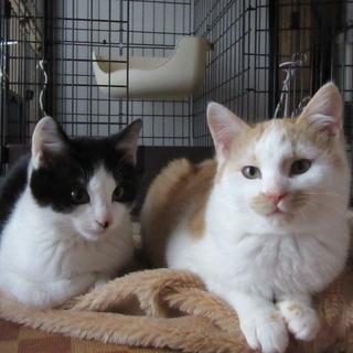 保護猫のくろちゃんとチャーちゃんです。