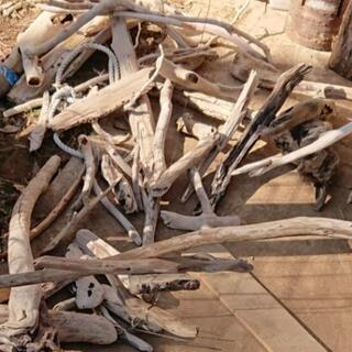 【郵便OK】自然流木です。 アクアリウム・テラリウム・飼育材・苔...