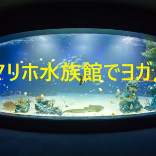 マリホ水族館でヨガ🐠✨