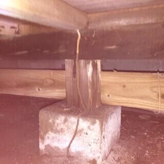 冬もシロアリは床下で活動しています( ;∀;)