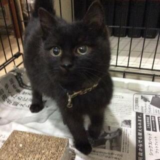 「停止中」半長毛の黒猫くん♥️