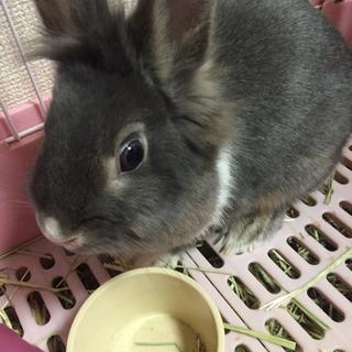 ウサギ  メス  推定2歳