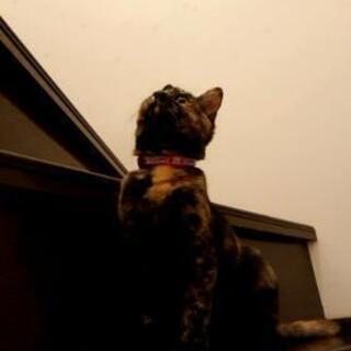 生後約4ヶ月の可愛い「さびネコ」です🍀