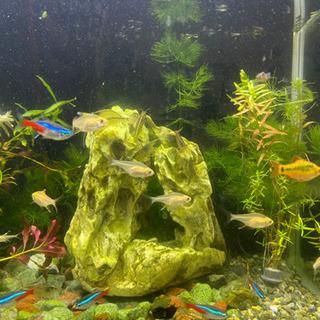 困ってます。  熱帯魚・金魚の初心者です。
