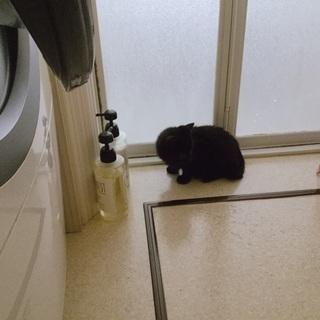 興味しんしんな黒猫さん