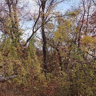 荒廃農地や荒廃山林の立木を伐採します。