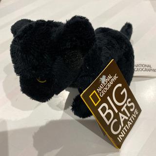 BIG CATS ぬいぐるみ