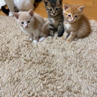子猫の里親募集してます!茨城県南