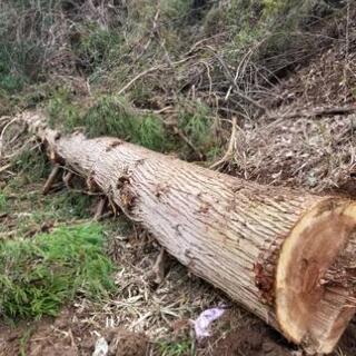杉の木 丸太 薪ストーブ 暖炉などに