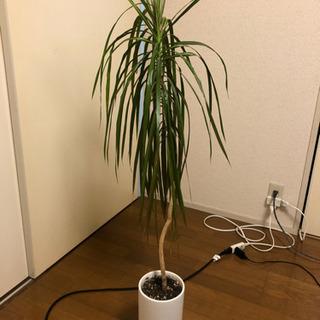 観葉 植物