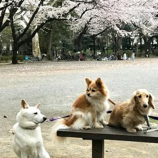 ペットシッターサービス(GK Pet Sitters)