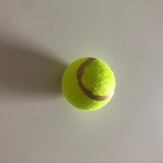 引取場所複数⭐️未使用 テニスボール 出産時にも
