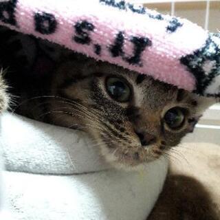 気の弱いキジ猫ちゃん