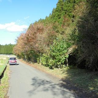 町道沿い平地 699㎡ 地目:山林