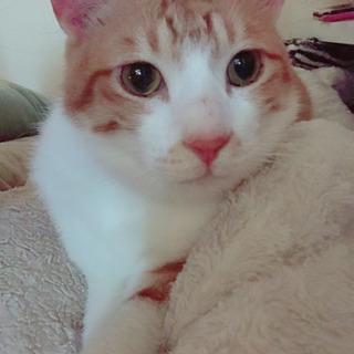 人懐っこいオス猫です