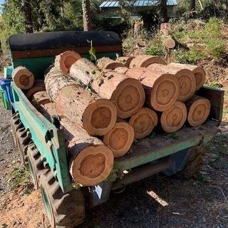 丸太(スギ、ヒノキ) 薪、キャンプ、木材加工などに 引き取り限定