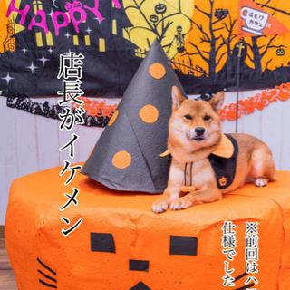 犬好きさんのチャリティ撮影会 − 東京都