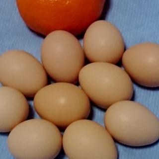 平飼い 【 うこっけいの卵 】お試し販売