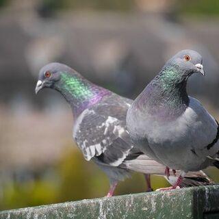 鳩対策します ソーラーパネル、ベランダ - 害虫/害獣駆除