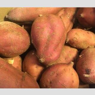 安納芋(種子島)2020-02-05〜 - 食品