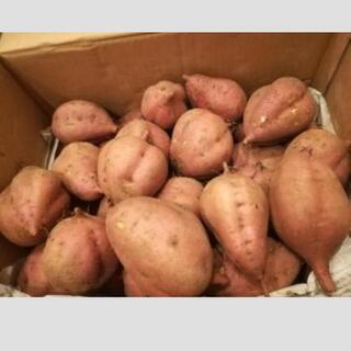 安納芋(種子島)2020-02-05〜の画像