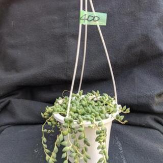 ピーチネックレス 4号吊り鉢