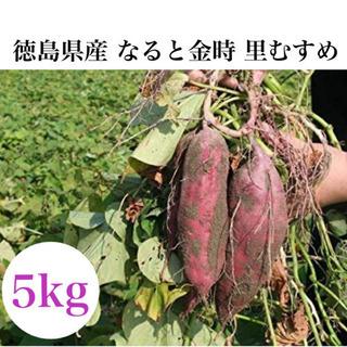徳島県産 なると金時 里浦 里むすめ 5kg サツマイモ ブラン...