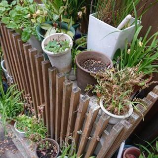 茶花等、鉢植え寄せ植えが多数あります
