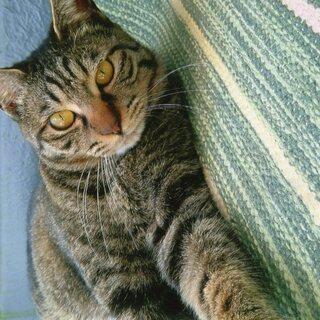 可愛い猫の里親募集中です