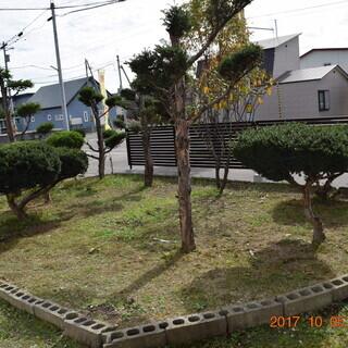 自宅の庭木・花木・果樹などの剪定や草取りします