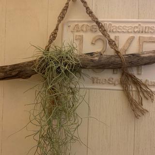 流木&スパニッシュモス インテリアに人気♬マクラメ編み
