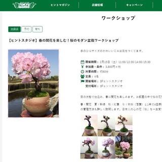 告知! 東急ハンズ池袋店で「桜の盆栽ワークショップ」開催!
