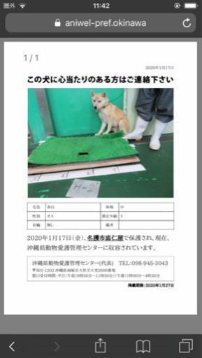 愛護 沖縄 動物 センター