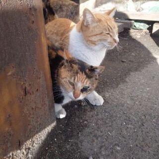 行き場を失ってしまう兄妹猫達  親共々 届出済  確認済み  代理投稿