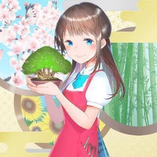 盆栽全般・盆栽鉢・盆栽資材 買い取り・引き取り致します❗ 【盆栽...