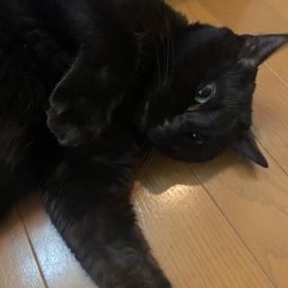 7歳くらいの黒猫ちゃんです。