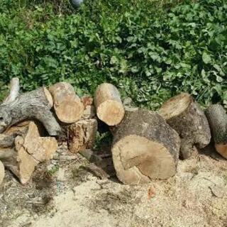 焚き火 薪丸太 生木